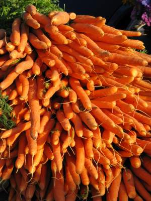 Vibrant bunch of carrots