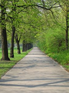 Roads lined with trees promote heart health in the region