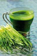 Wheatgrass: Grazing for health | Complete Wellbeing
