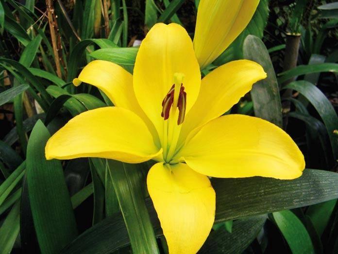 Pelling - array of flowers