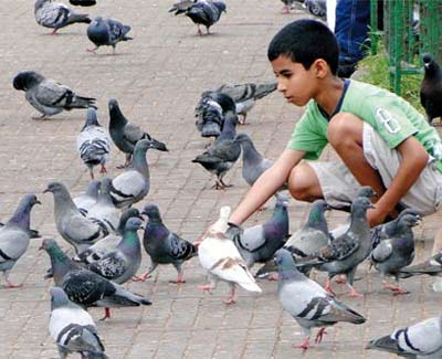 Boy giving pulses to pigeons