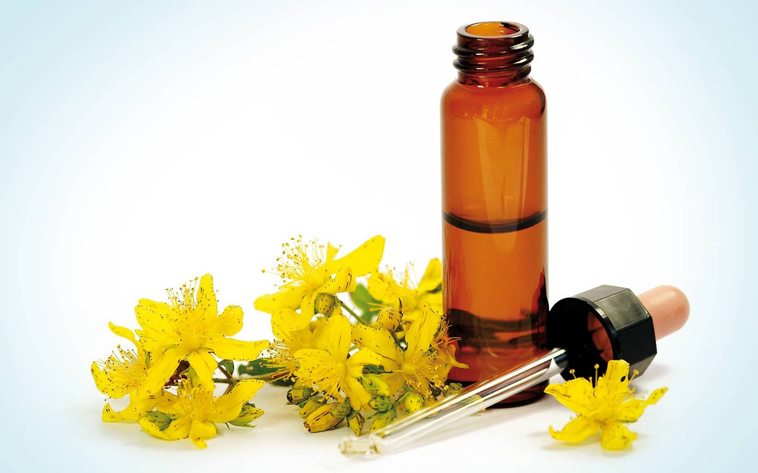 Bach Flower Remedies Flowers That Heal Complete Wellbeing