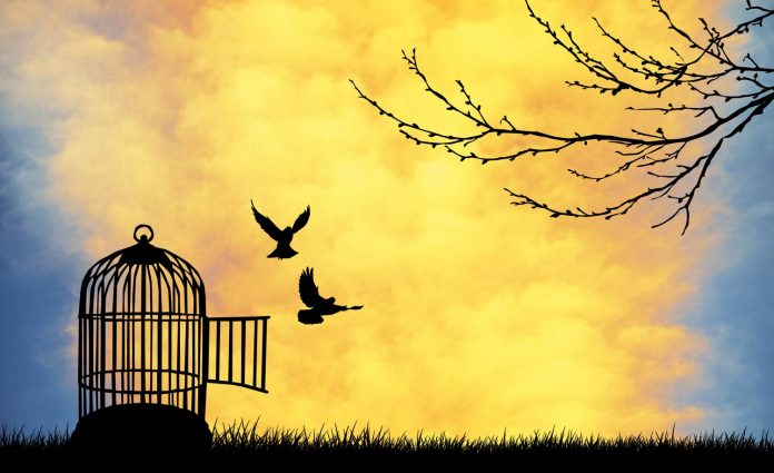 Birds flying with freedom from the cage