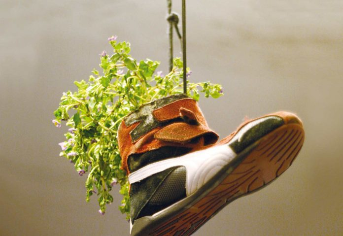 Plants in the shoes