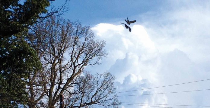 A clouds with two bird