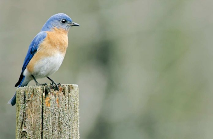 A bird sitting on the top on log