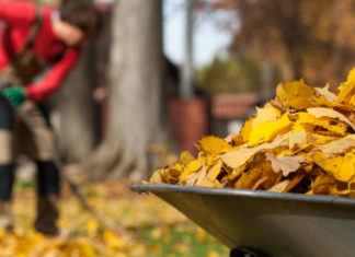 Gardener clearing autumn leaves - concept of imperfection in Zen